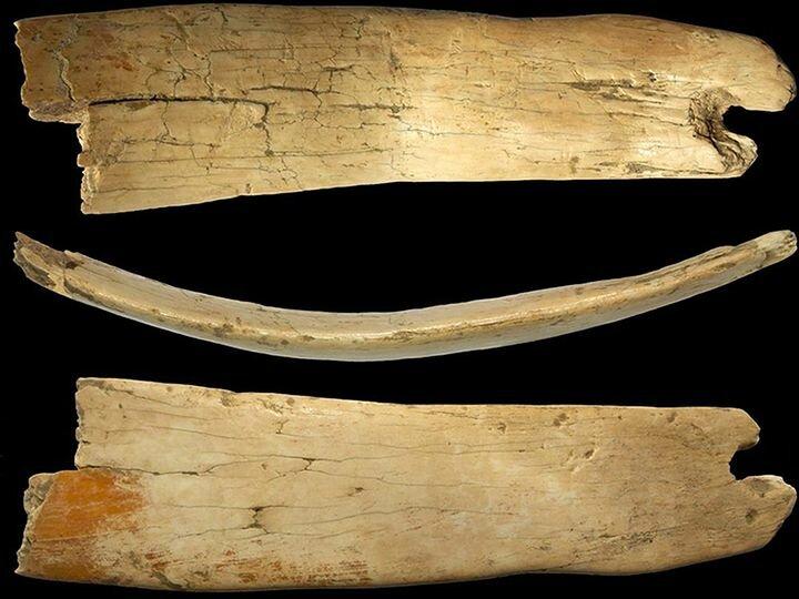 Выдающееся открытие в Денисовой пещере, которому 50 тыс. лет